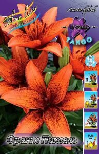 Lilium Orange Pixels