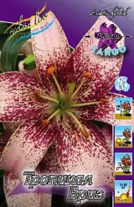 Lilium Tropical Breeze